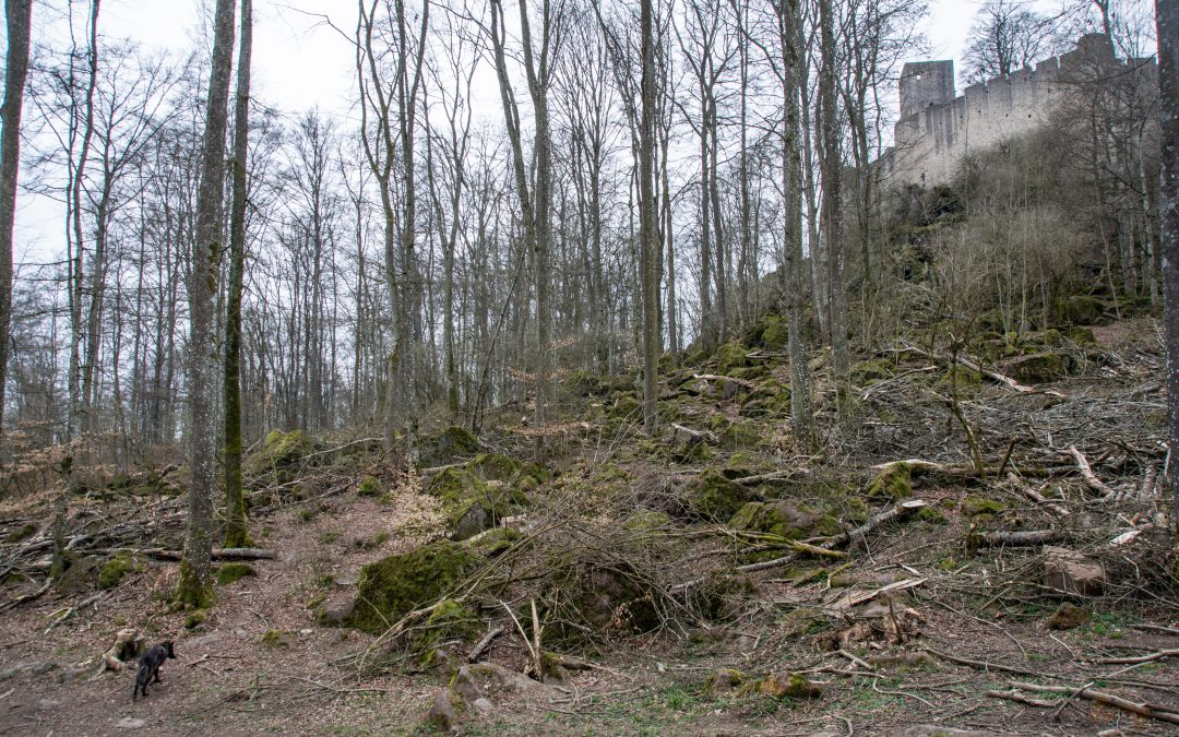 Ein paar Bilder … vom größten Wolfsrudel Westeuropas auf der Kasselburg in der Eifel