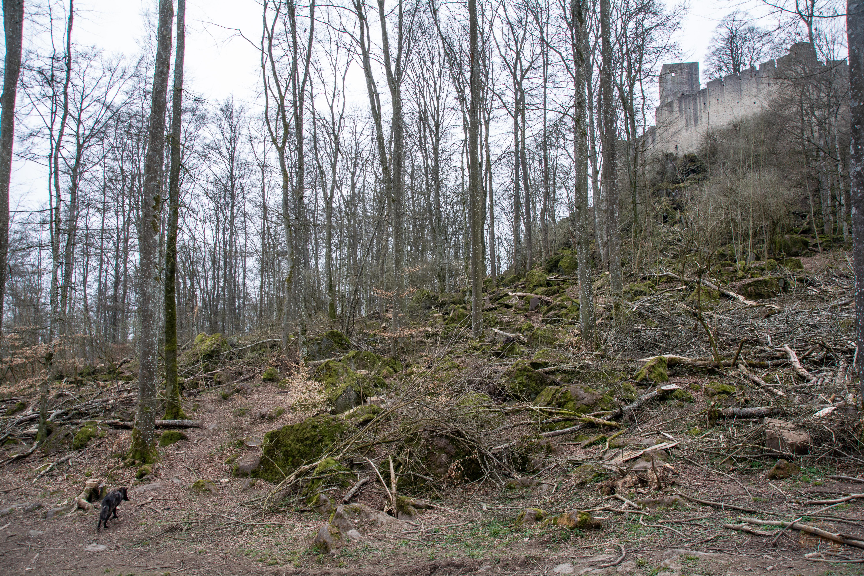 Adler- und Wolfspark Kasselburg - Eifel