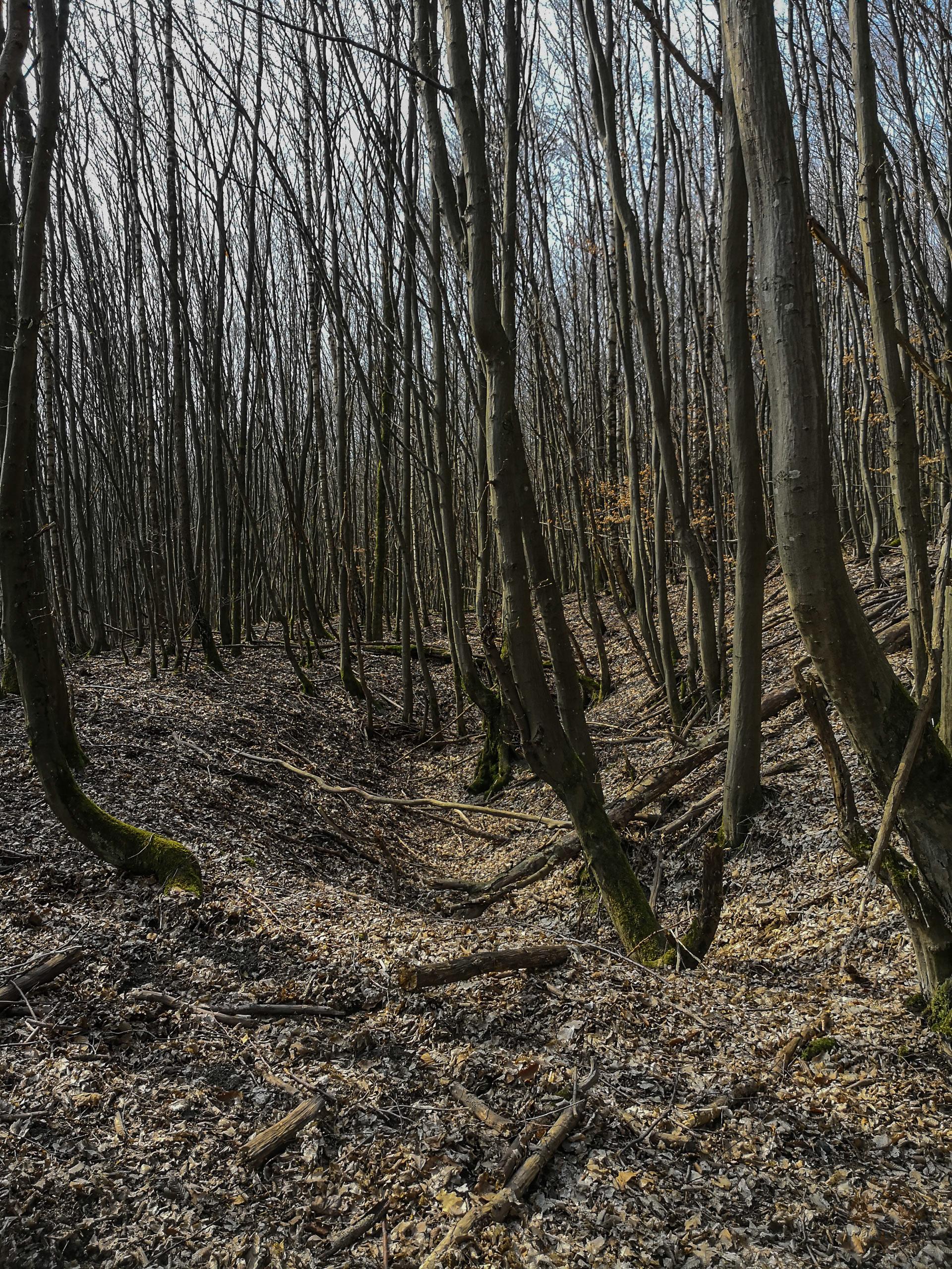 Reden Bergbaupfade Höfertaler Wald Pfad Saarland