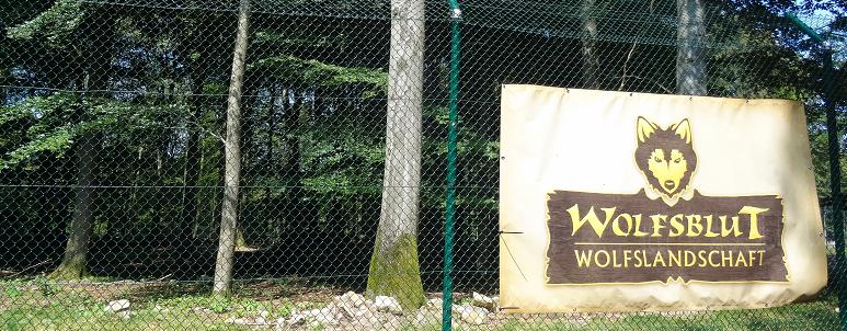 Wolfsblut Wolfslandschaft - Wildfreigehe Wildenburg