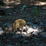 Wildfreigehege Wildenburg - Wildschwein Ferkel - Rukhis Expedition