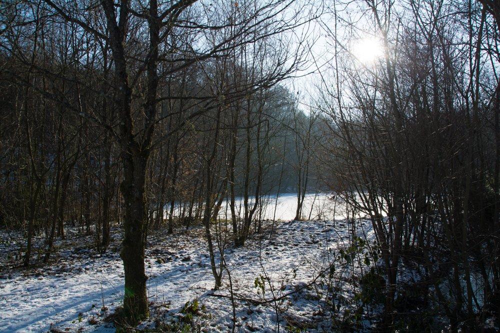 Licht und Schatten | Eine Sonntagsrunde auf Glatteis um den Heinitzer Weiher | Photo Diary