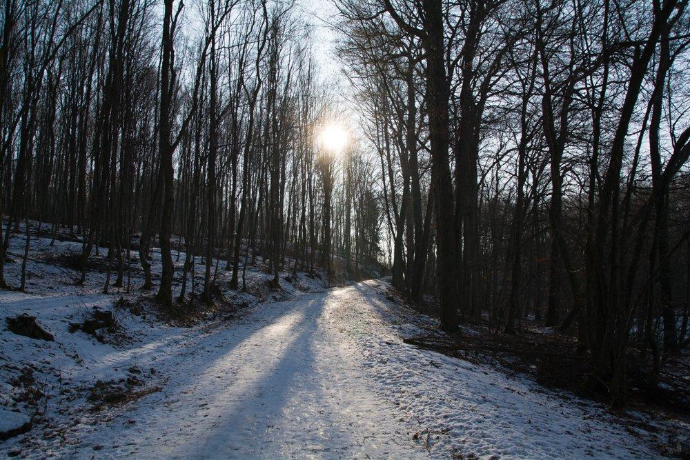 Schatten | Eine Sonntagsrunde auf Glatteis um den Heinitzer Weiher | Photo Diary