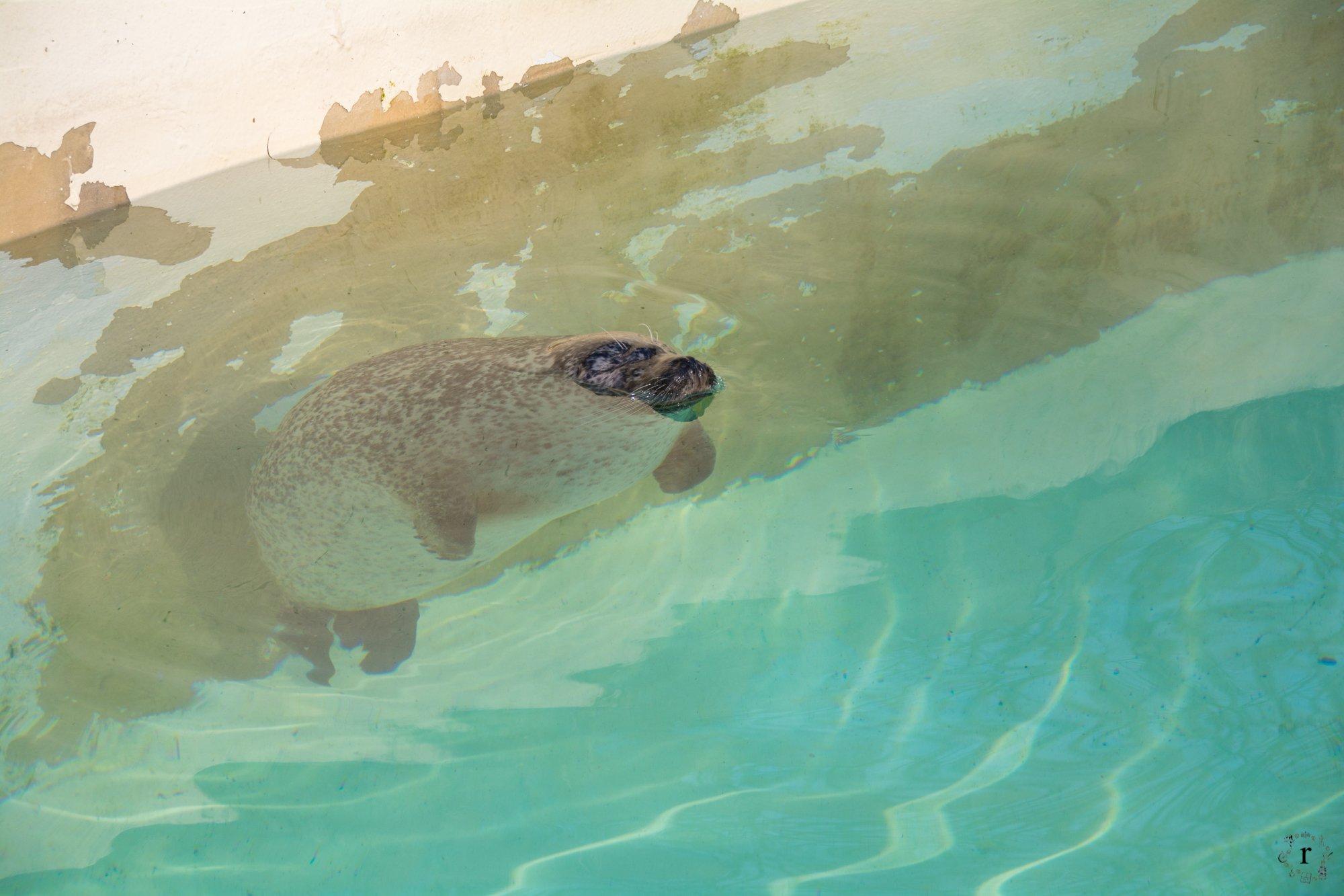 Neunkircher Zoo - Seehund