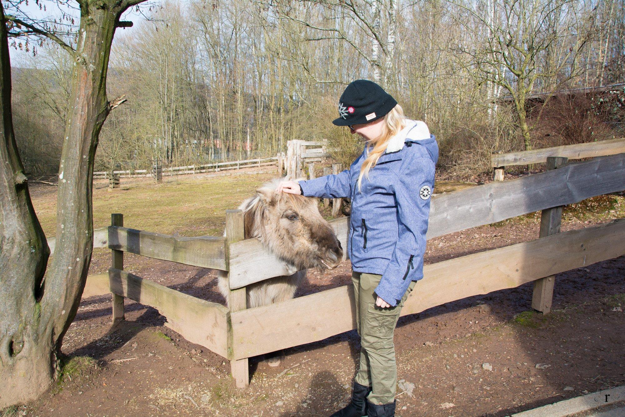 Neunkircher Zoo - Shettland Pony