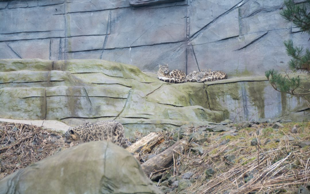 Können Waschbären eigentlich fliegen? | Photo Diary aus dem Neunkircher Zoo (Saarland)