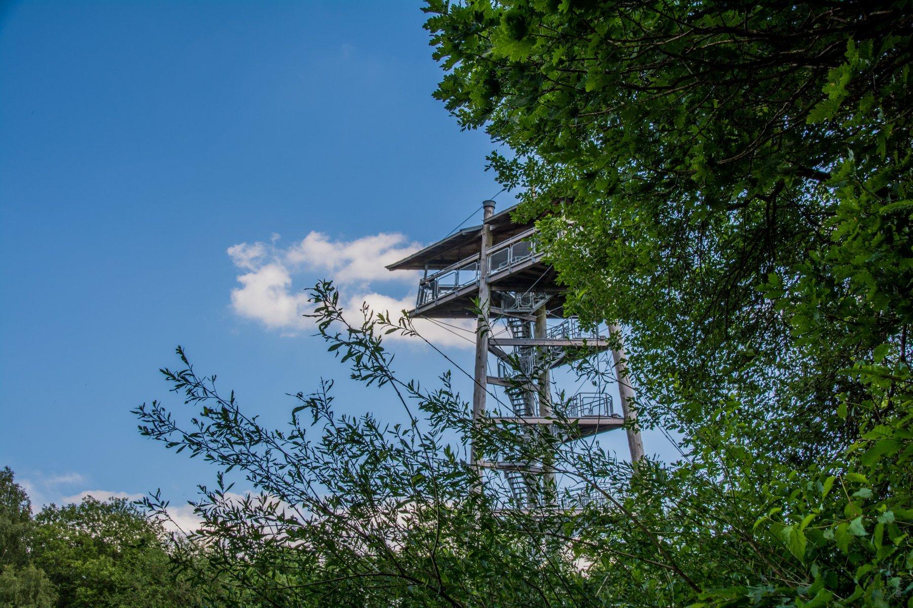 Mit Willi Wurzel durch den Zauberwald im Birkenfelder Land