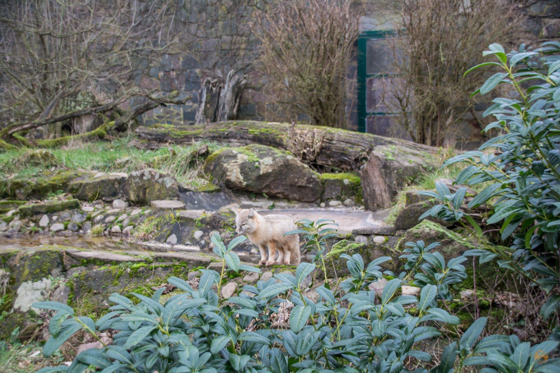 Zoo Saarbrücken Saarland