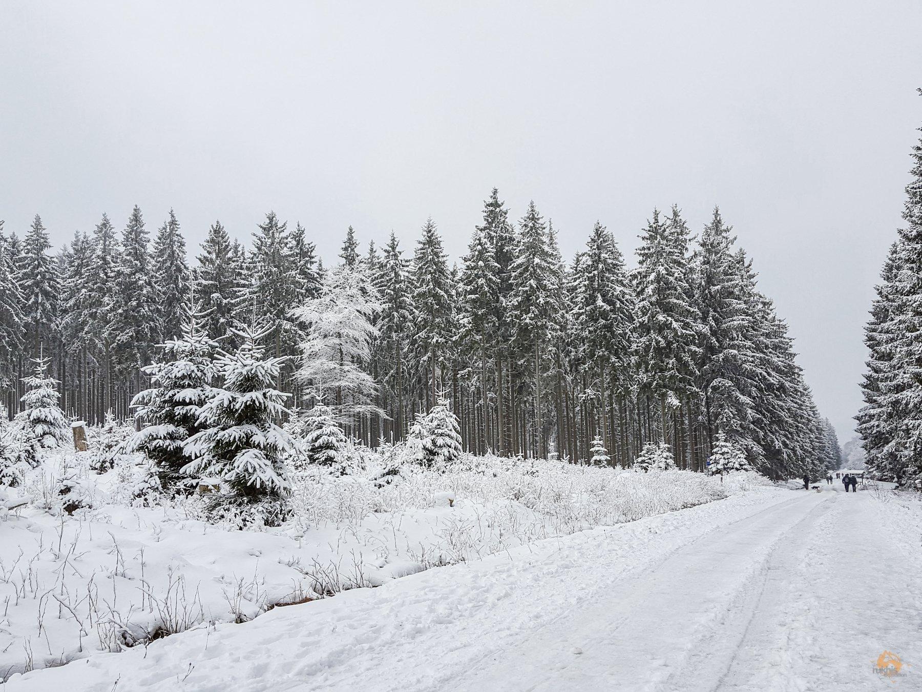 Winter Wonderland am Erbeskopf - Hunsrück-Hochwald - Rheinland Pfalz