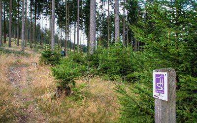 Baumschubser und Ausblicke auf der Nationalpark Traumschleife Gipfelrauschen am Erbeskopf