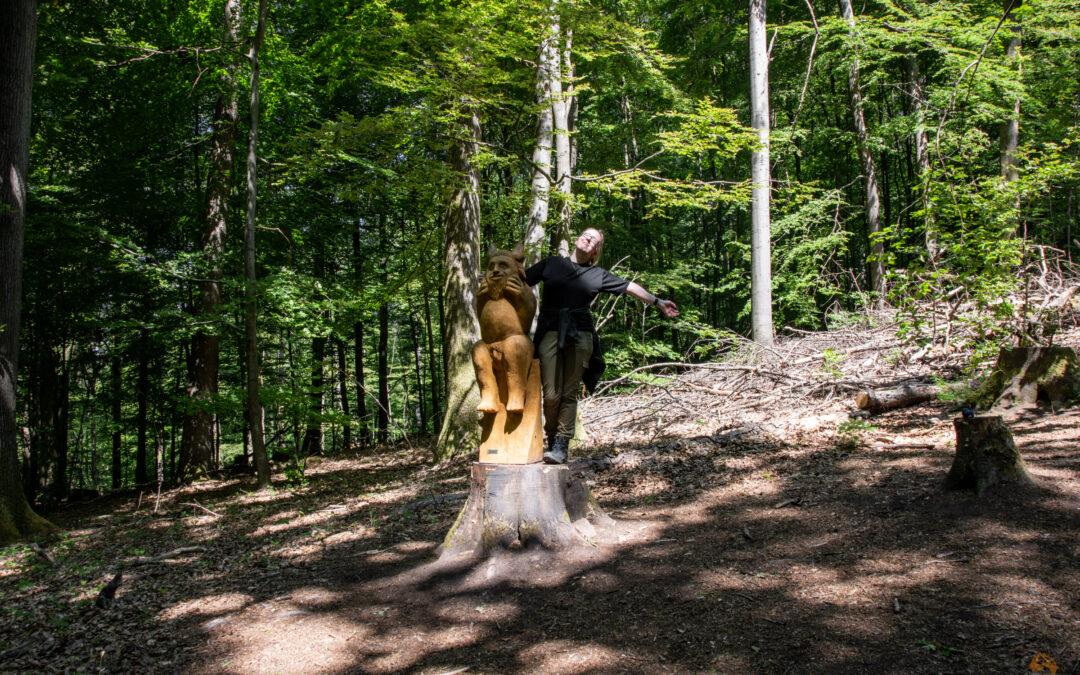 Der vielleicht schönste Wanderweg Deutschlands? | Der Teufelspfad bei Pirmasens im Pfälzerwald